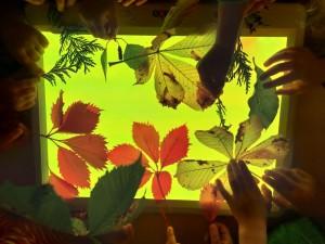 Rudeninių lapų komponavimas ant šviesos lentos